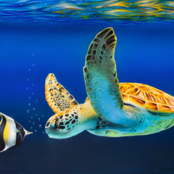 Le zancle & la tortue